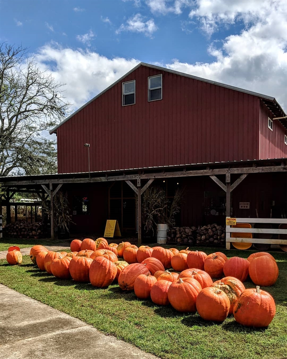 The Best North Georgia Pumpkin Patches